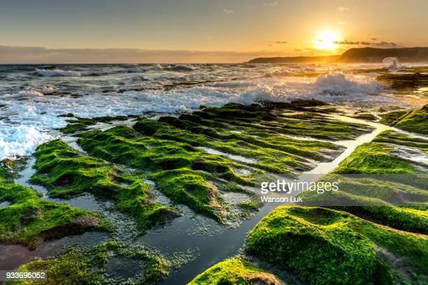 green reef of taiwan laomei - 藻 ストックフォトと画像