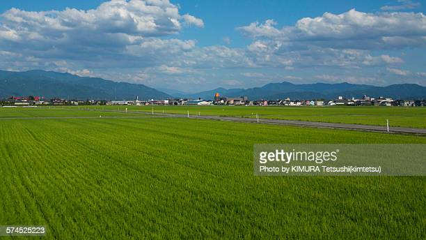green rice field and blue sky in japan - hokuriku region stock photos and pictures