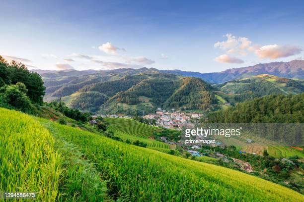 risaia verde catena montuosa sapa lao cai provincia nord vietnam - guanyin bodhisattva foto e immagini stock