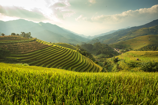 Green Rice field  on terraced - gettyimageskorea