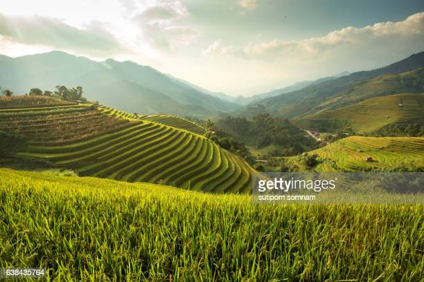 green rice field  on terraced - china east asia stock pictures, royalty-free photos & images