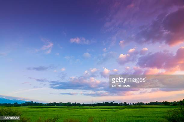 green rice fild with evening sky - avondschemering stockfoto's en -beelden