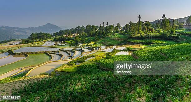 Green rice terraces at Yuanyang, Yunnan, China