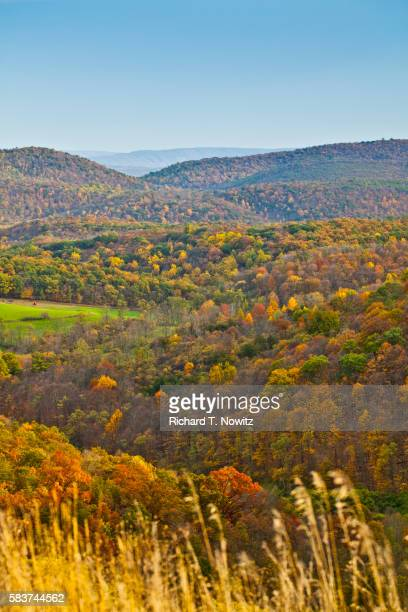 green ridge state forest - maryland us state stock pictures, royalty-free photos & images