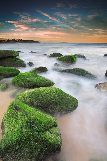 Green rocks at Curl Curl Beach