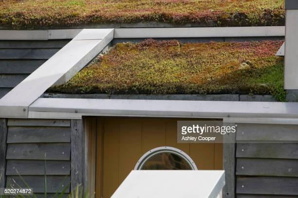 green roof at bedzed - bedzed fotografías e imágenes de stock