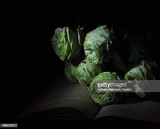 green roses on book in darkroom - nathalie pellenkoft stock pictures, royalty-free photos & images