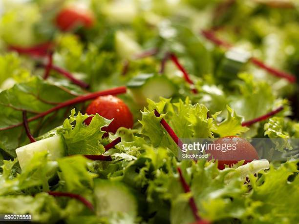 Green salad with cherry tomatoes and cucumber (close up)