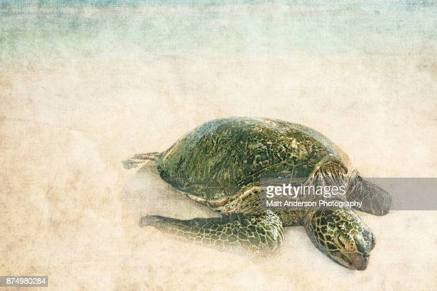 Green sea turtle canvas treatment