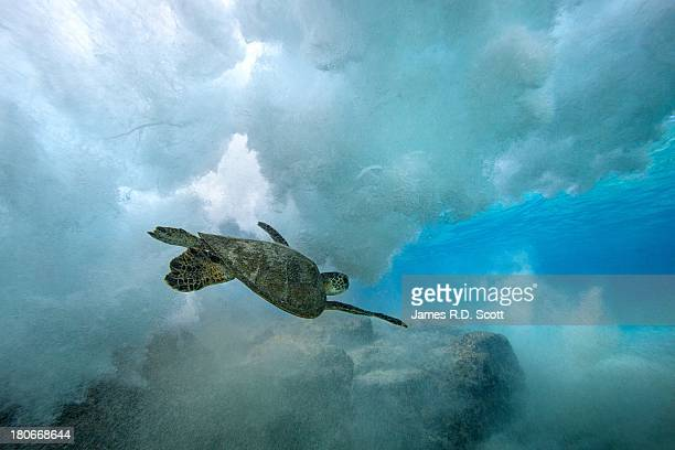 green sea turtle swimming through wave - big island hawaii islands stock pictures, royalty-free photos & images