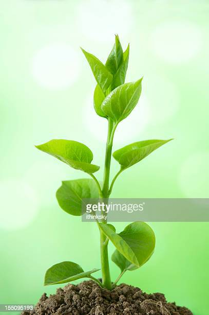 Green seedling isolated on white