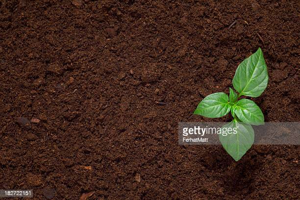 Green seedling sprout in dark dirt