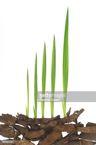 Green shoots growing from broken bark.