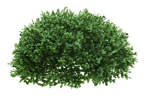 Green Shrub 1134308148