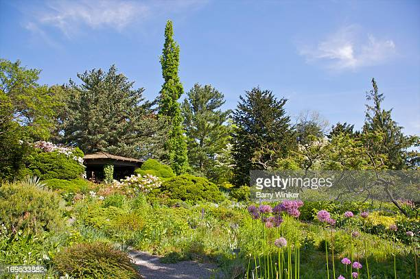 green shrubs under blue sky - the bronx stock pictures, royalty-free photos & images
