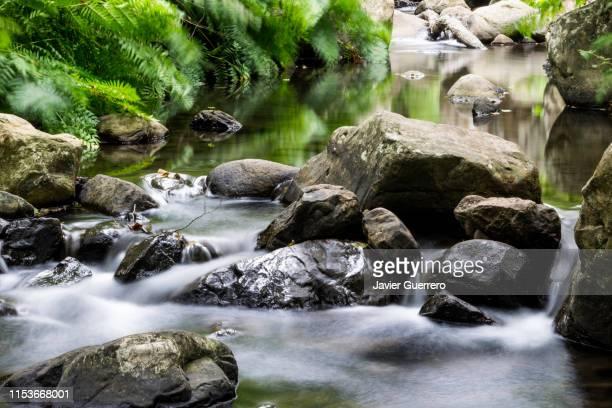 green silk river - süßwasser stock-fotos und bilder