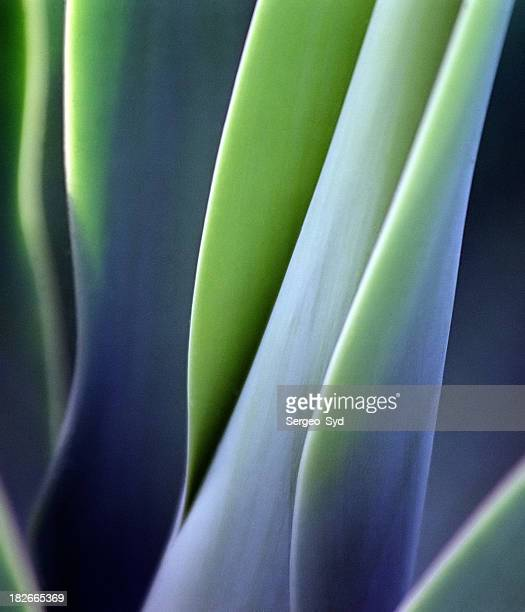 Vert feuilles doux