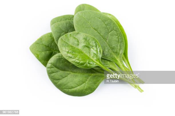green spinach leafs on a white background - spinach stock pictures, royalty-free photos & images