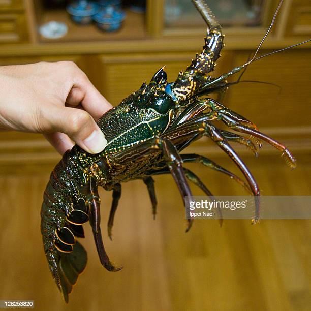 Green spiny Lobster