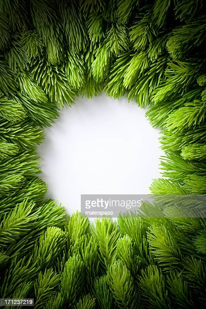 green sprigs of fir arranged in a circle. - christmas garland stock pictures, royalty-free photos & images