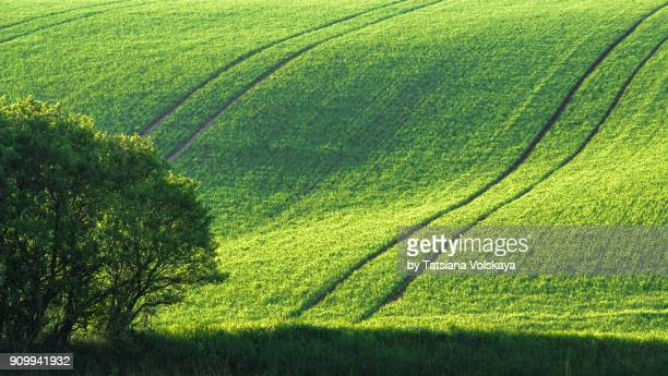Green spring field abstract background