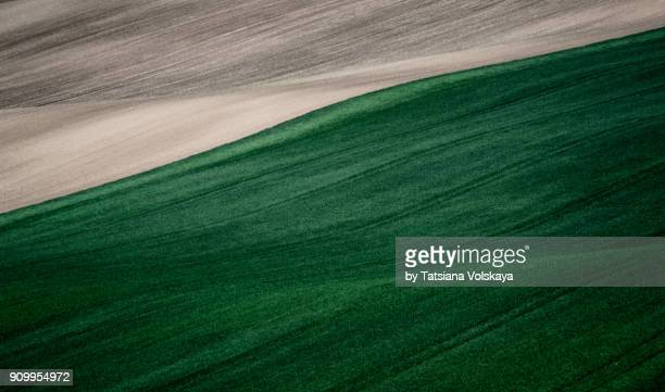 Green spring field abstract nature background