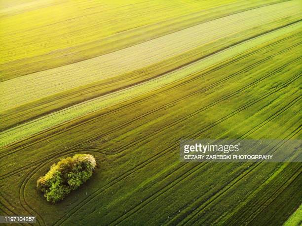 green spring fields from above - poland stock pictures, royalty-free photos & images