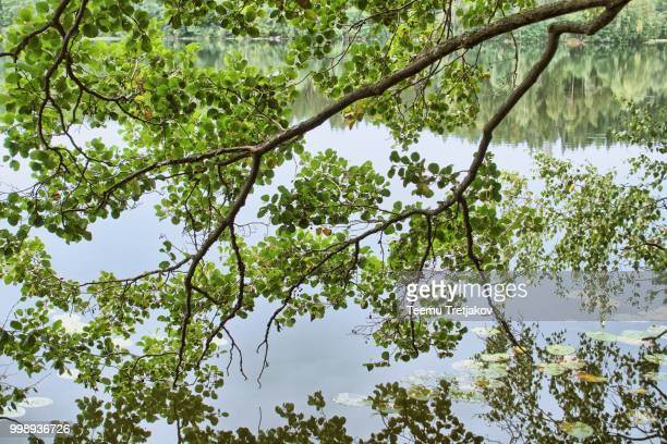 Green springtime tree branch  and still water of a lake on the background