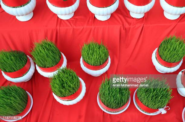 Green sprouts await purchase in Tajrish Square to celebrate Nowruz, the Persian New Year, on March 20, 2019 in Tehran, Iran. Nowruz is calculated...