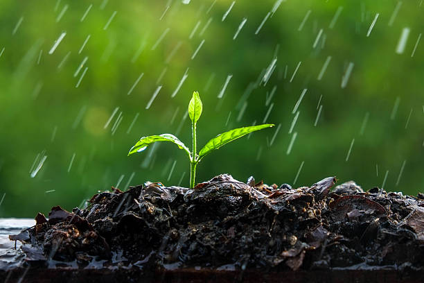 free plant rain images pictures and royalty free stock photos