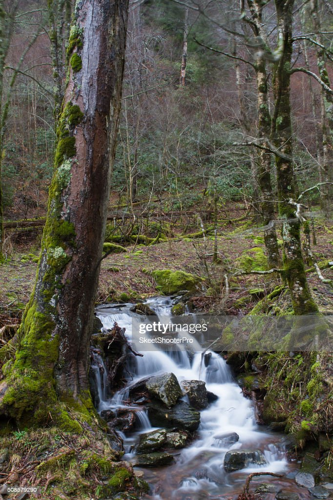 Green Stream : Stock-Foto