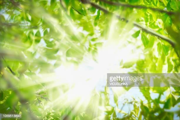 green summer foliage background with sun rays - kruin stockfoto's en -beelden