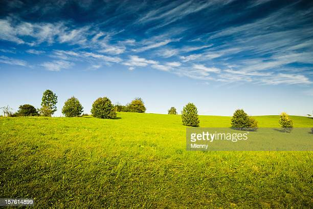 green summer meadow - mlenny stock pictures, royalty-free photos & images