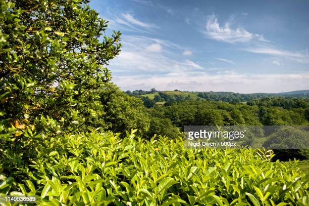 green summer - nigel owen stock pictures, royalty-free photos & images
