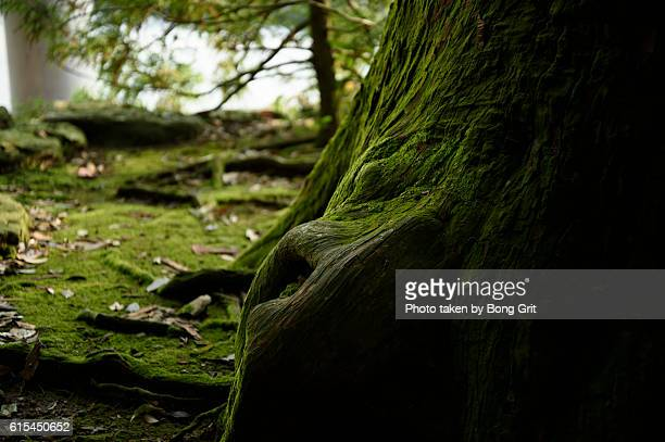 green surface - ise mie stock pictures, royalty-free photos & images
