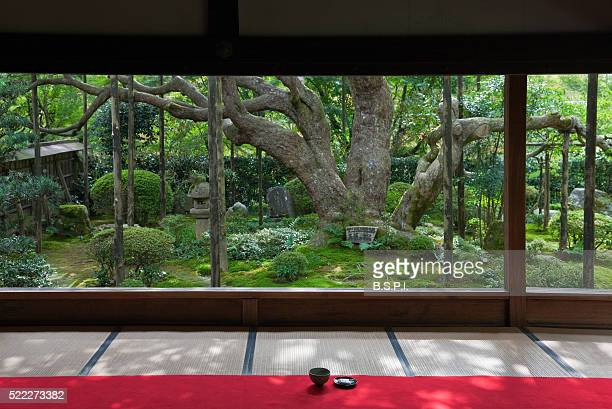 Green Tea and Ancient Pine Tree at Hosen-in Temple Garden in Kyoto, Japan