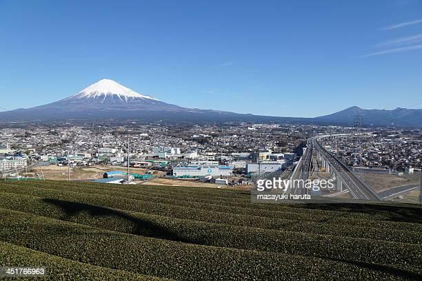 green tea leaves and mt. fuji  at fuji city, shizu - 静岡県 ストックフォトと画像
