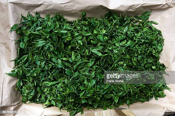 green tea leaves - hoja te verde fotografías e imágenes de stock