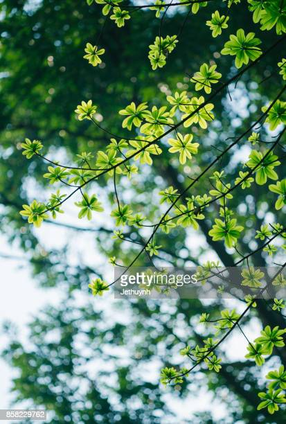 green tender leaves in beautiful light with film tone - bright 2017 film ストックフォトと画像