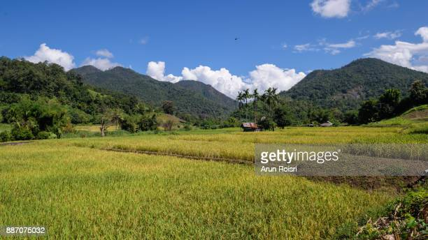 Green terraced rice field in Mae hong son province, north of Thailand