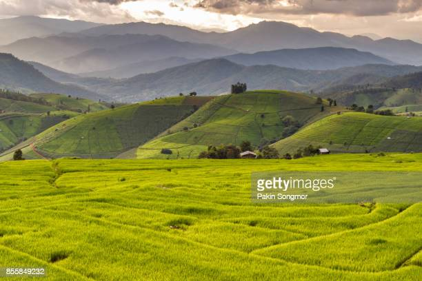 green terraced rice field in pa pong pieng , mae chaem, chiang mai, thailand - valley stock pictures, royalty-free photos & images