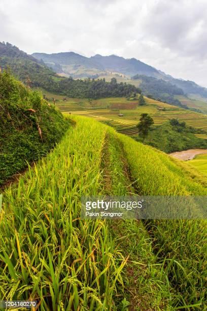 green terraced rice fields in rainny season at mu cang chai - paisajes de filipinas fotografías e imágenes de stock