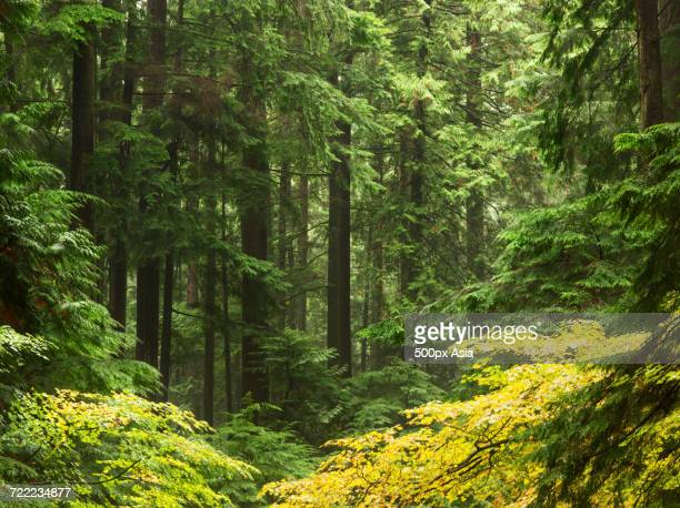 Green thick forest, United States