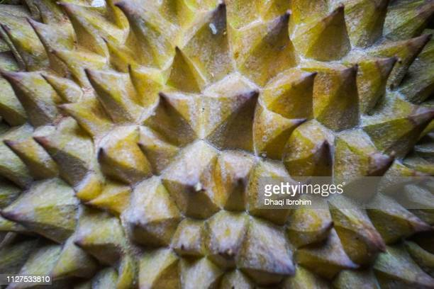 Green thorn of durians