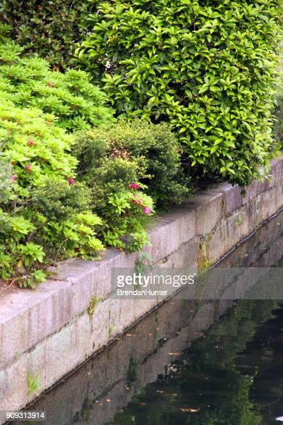 verde para el canal - hunter green fotografías e imágenes de stock