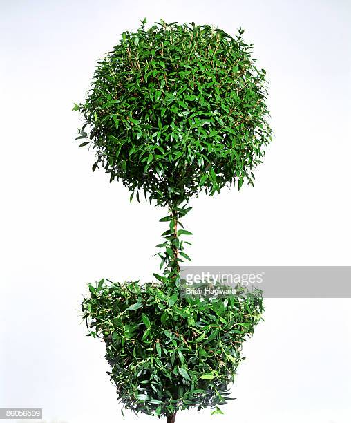 green topiary - bush stock pictures, royalty-free photos & images