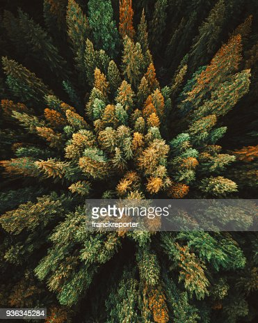 green tree aerial view in washington state