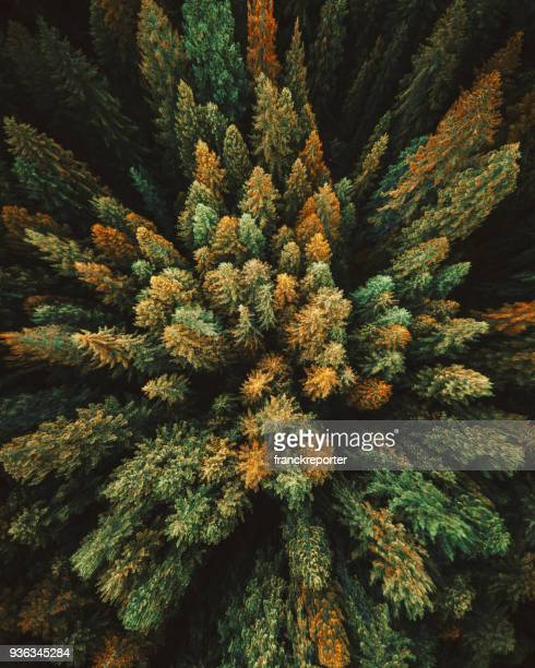 green tree aerial view in washington state - top foto e immagini stock