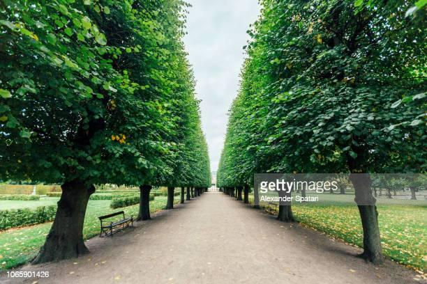 Green tree alley in King's Garden (Kongens Have) in Copenhagen, Denmark