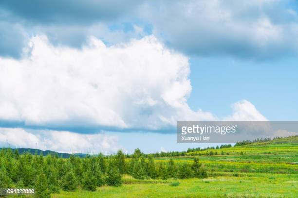 green tree and blue sky - altocumulus stockfoto's en -beelden